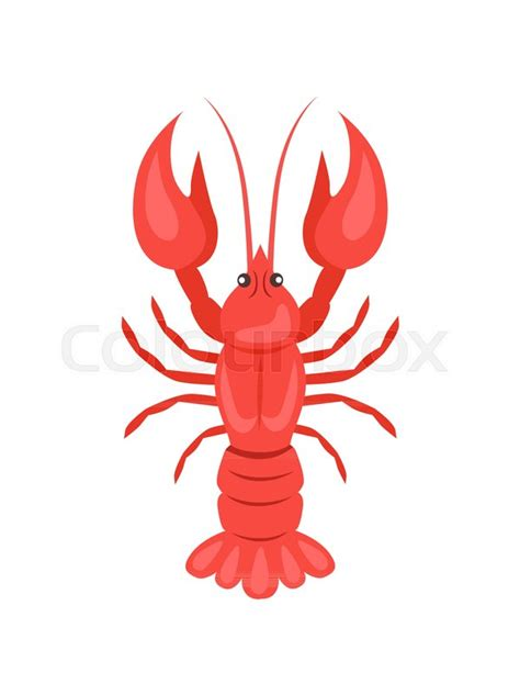 red crayfish vector illustration isolated  white