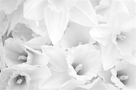 White Flowers Free Stock Photo  Public Domain Pictures