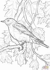 Coloring Bird Pages Bluebird Mountain State Nevada Idaho Birds Drawing Printable Flower Rocky Books Mountains Supercoloring Orange National Adult Sheets sketch template