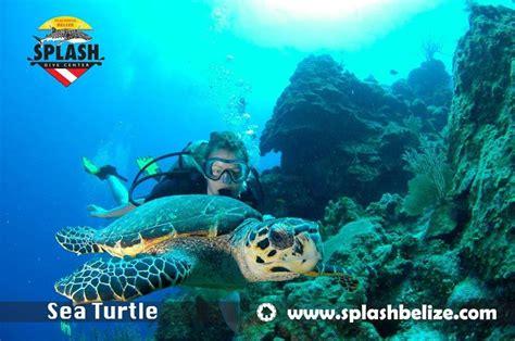 splash dive center belize diving services belize scuba
