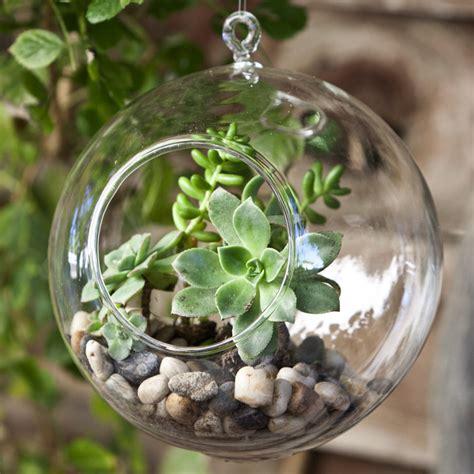 hanging terrariums decorative glass terrarium glass