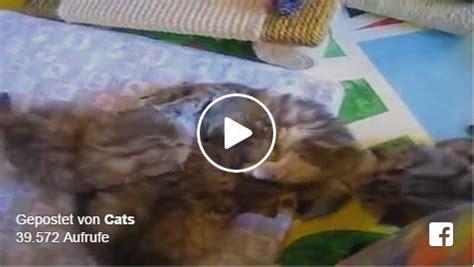 suesse kleine baby katzen geliebte katze magazin