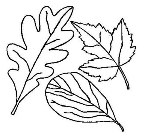 drawn leaves autumn leaf pencil   color drawn