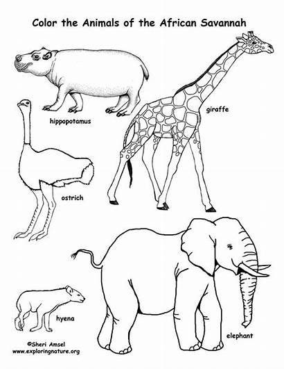 Coloring Animals Pages Children African Africa Savanna