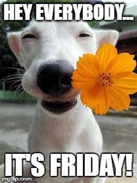 Happy Weekend Meme - best 25 happy friday ideas on pinterest friday feeling weekend quotes and friday night quotes