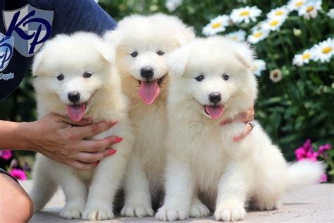 Puppy Finder Find And Buy A Dog Today By Using Our