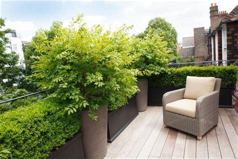 Pflanzen Für Dachterrasse by Dachterrasse Mit Holzdielen Und Kleine Hecke Als