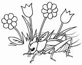 Coloring Insect Cricket Grass Flowers Pages Funny sketch template