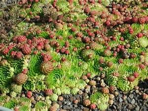 Extensive Dachbegrünung Pflanzen : garten und landschaftsbau zinke in arenshausen dachbegr nung ~ Frokenaadalensverden.com Haus und Dekorationen