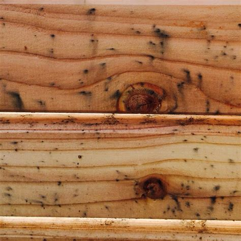 wie bekomme ich schimmelsporen aus lerchenholz schimmel