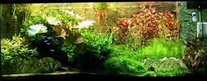 Aquarium Einrichten Beispiele : mein aquarium wor ber wir hier eigentlich reden aquarium welt ~ Frokenaadalensverden.com Haus und Dekorationen