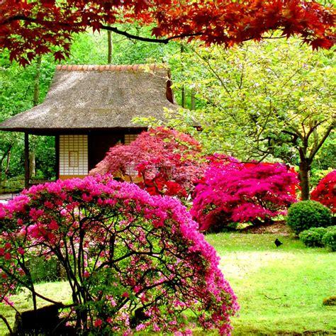 beautiful flowers garden hd wallpaper hd latest wallpapers