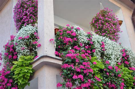 sichtschutz aus pflanzen f 252 r den balkon 187 wissenswertes