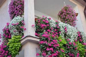 Sichtschutz Aus Pflanzen : sichtschutz aus pflanzen f r den balkon wissenswertes ~ Michelbontemps.com Haus und Dekorationen