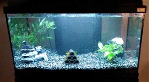 eau trouble aquarium eau chaude eau trouble en d 233 but de rodage