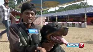 Chennai dog exhibition attracts viewers   News7 Tamil ...