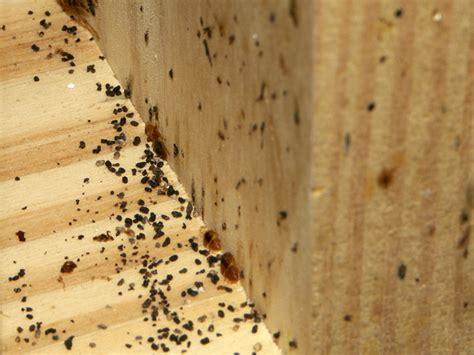 Little Ants In Bathroom by Pest Control In Toronto Jamie Sarner