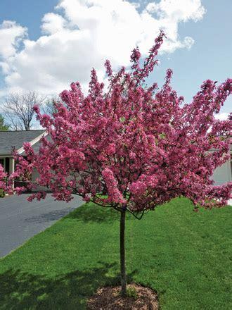Small Springflowering Trees  Wisconsin Gardening Web