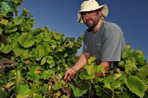 chambre agriculture 07 le landreau des formations pour devenir viticulteur