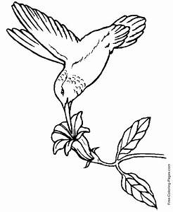 Printable coloring pages of birds - Hummingbird 01