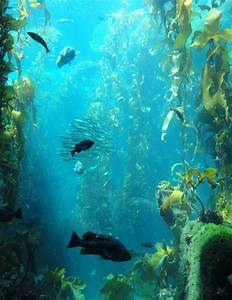 The Fisheries Blog  Trophic Downgrading