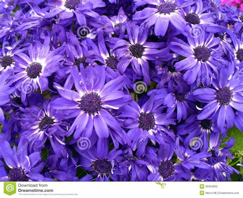 Comp Backgrounds Purple Flowers Stock Photo Image Of Beautiful