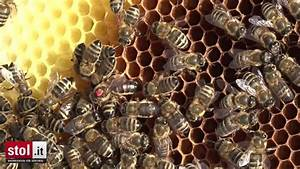Wie überwintern Bienen : wie berwintern eigentlich bienen ~ A.2002-acura-tl-radio.info Haus und Dekorationen