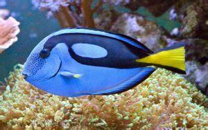 herbivores   pacific ocean deepoceanfactscom