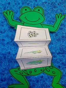 frog life cycle activity for kids with life cycle ...