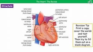 Ocr Gateway A B2 2 3b Heart Summary
