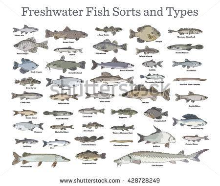 white types types of white fish and name pictures to pin on pinterest pinsdaddy