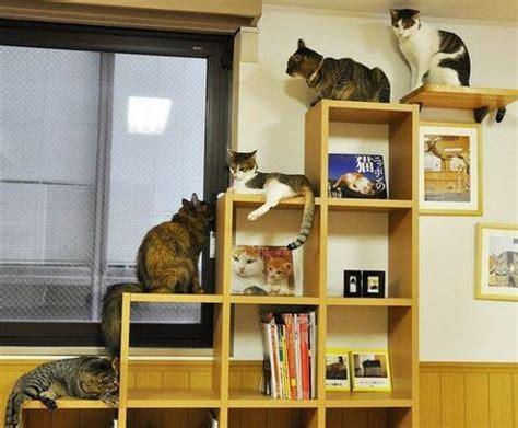 Book Shelf For Climbing Cats  Cat Design Ideas