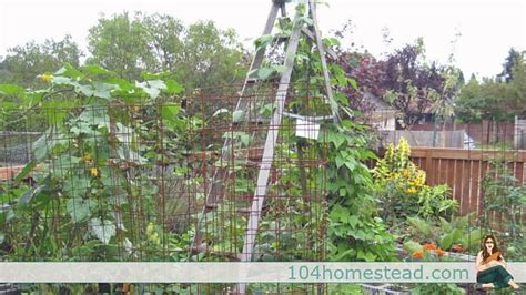 Low Garden Trellis by Low Cost No Cost Garden Trellis Ideas
