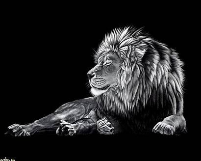 Lion Desktop Wallpapers Hq Cool Backgrounds Wallpapersafari