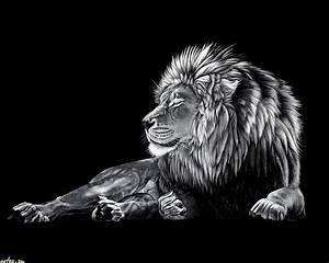 Black and White Lion Wallpaper - WallpaperSafari