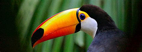 Wildlife Tropical Rainforest Vacation