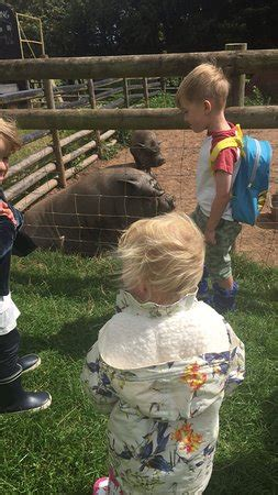 Barn Farm Reviews by Top Barn Farm Park Worcester 2019 All You Need To