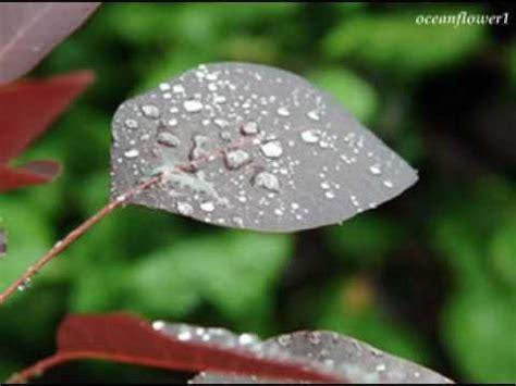 Falling Rain in One Spot
