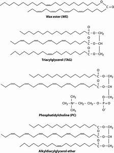 Chemical Structures Of Different Storage Lipids In
