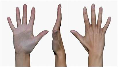 Hand Female Fist 3d Scan Optical Close