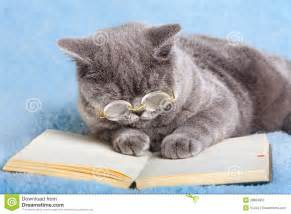 Cat Wearing Glasses and Reading