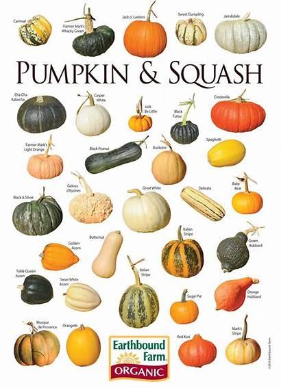 Pumpkin Squash Varieties Chart Google Types Myscaryblog