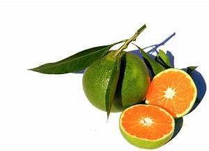 Orange Et Vert Dunkerque : la cuisine du jardin agrume jus d 39 ~ Dailycaller-alerts.com Idées de Décoration
