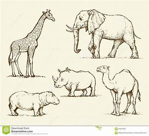 African Animals. Vector Drawing Stock Vector - Image: 65287825