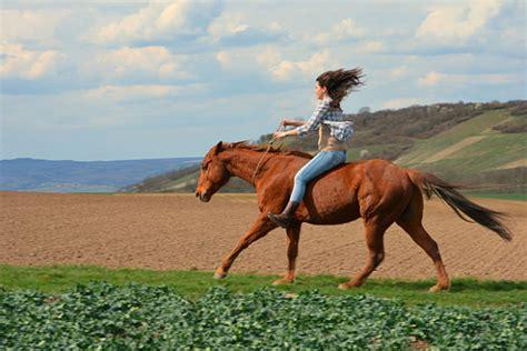 gebisslos reiten die schoensten pferdefotos der cavallo