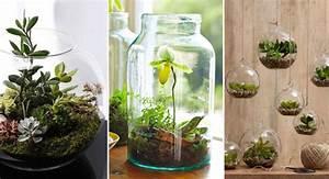 La tendance des mini jardins fait fureur depuis quelques for Mini jardin d interieur