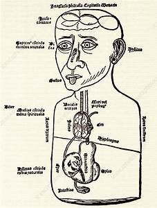 Internal Anatomy  15th Century Diagram