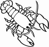 Coloring Lobster Pages Lobsters sketch template