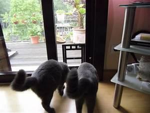 Türschutzgitter Mit Katzenklappe : katzenklappe in fliegengittert r seite 2 katzen forum ~ Whattoseeinmadrid.com Haus und Dekorationen