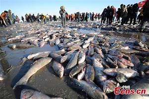 First fish sold for $121,640 at Chagan Lake winter fishing ...